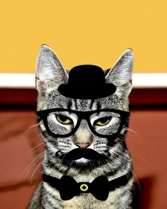 cat-1474092_1280